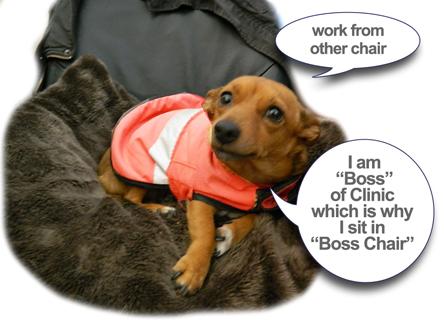 Hanly Vet Boss Chair