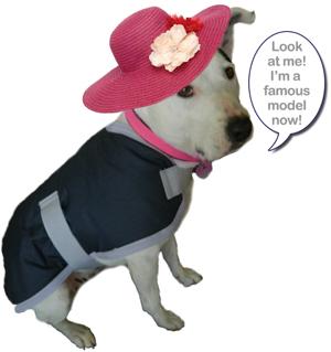 Dapper Dog coats