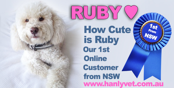 Meet Ruby 1st Pet from NSW Welcome to our Family