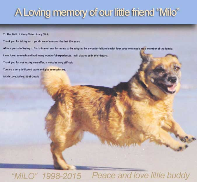 A loving memory of our little friend Milo
