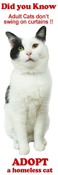 Adopt a homeless cat